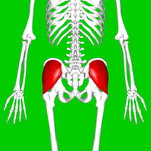 تقویت عضله سرینی میانی
