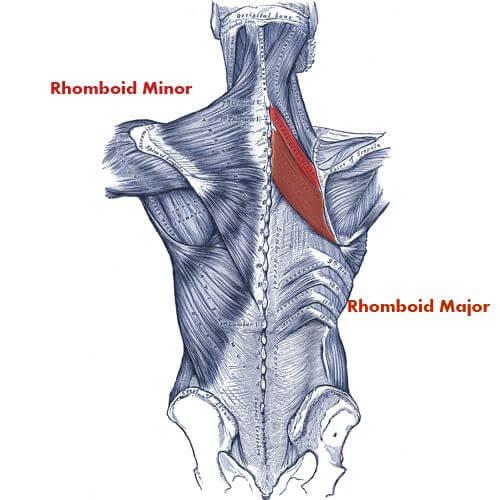 تقویت عضله متوازی الاضلاع