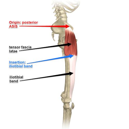 تقویت عضله کشنده پهن نیام