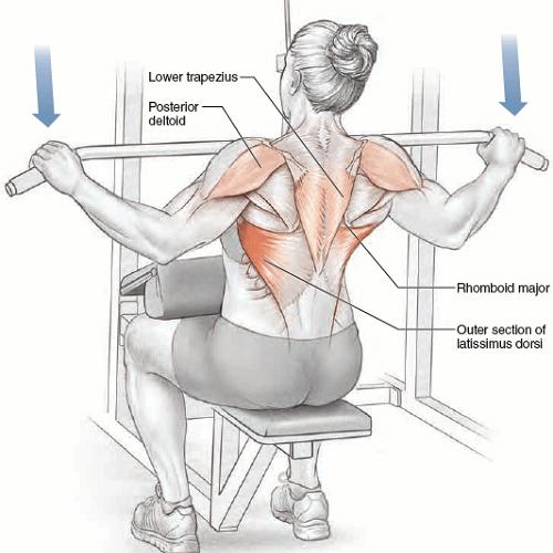 آناتومی حرکات بدنسازی: زیربغل سیمکش از جلو دست باز