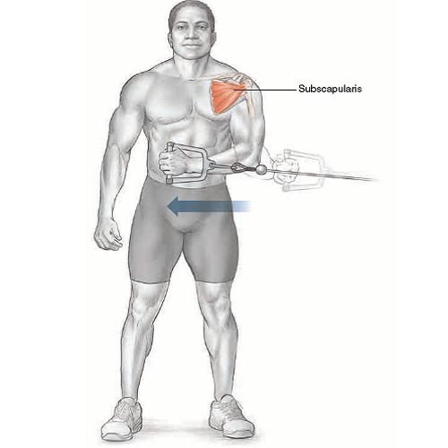 آناتومی حرکات بدنسازی: چرخش داخلی بازو سیم کش