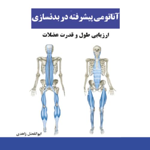 آناتومی عضلات