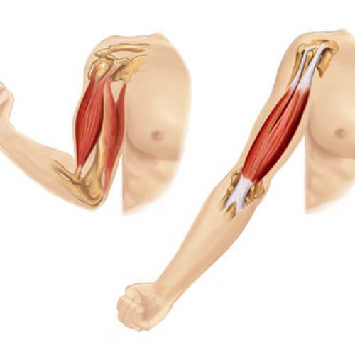 انقباض عضلات